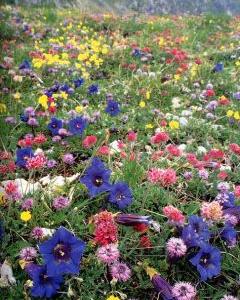 PARCO NAZIONALE GRAN PARADISO: Floralpe, imparare a coltivare le piante di montagna
